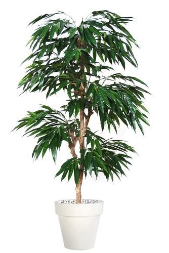Longifolia Multistep 180 cm Green